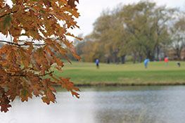 Golfes in the fall on the golf course with fall colored trees.