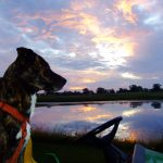 Trixie the goose dog at sunset.